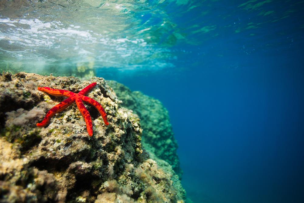 Starfish Group Properties Inc
